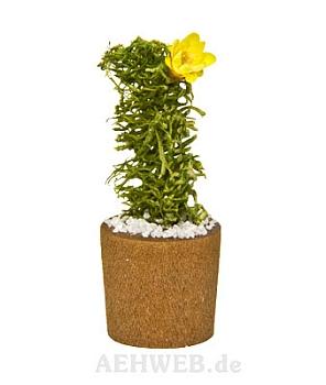 Blumentopf mit Kaktus