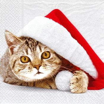Serviette - Santa Cat