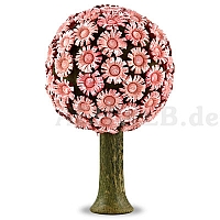 Blütenbaum rose